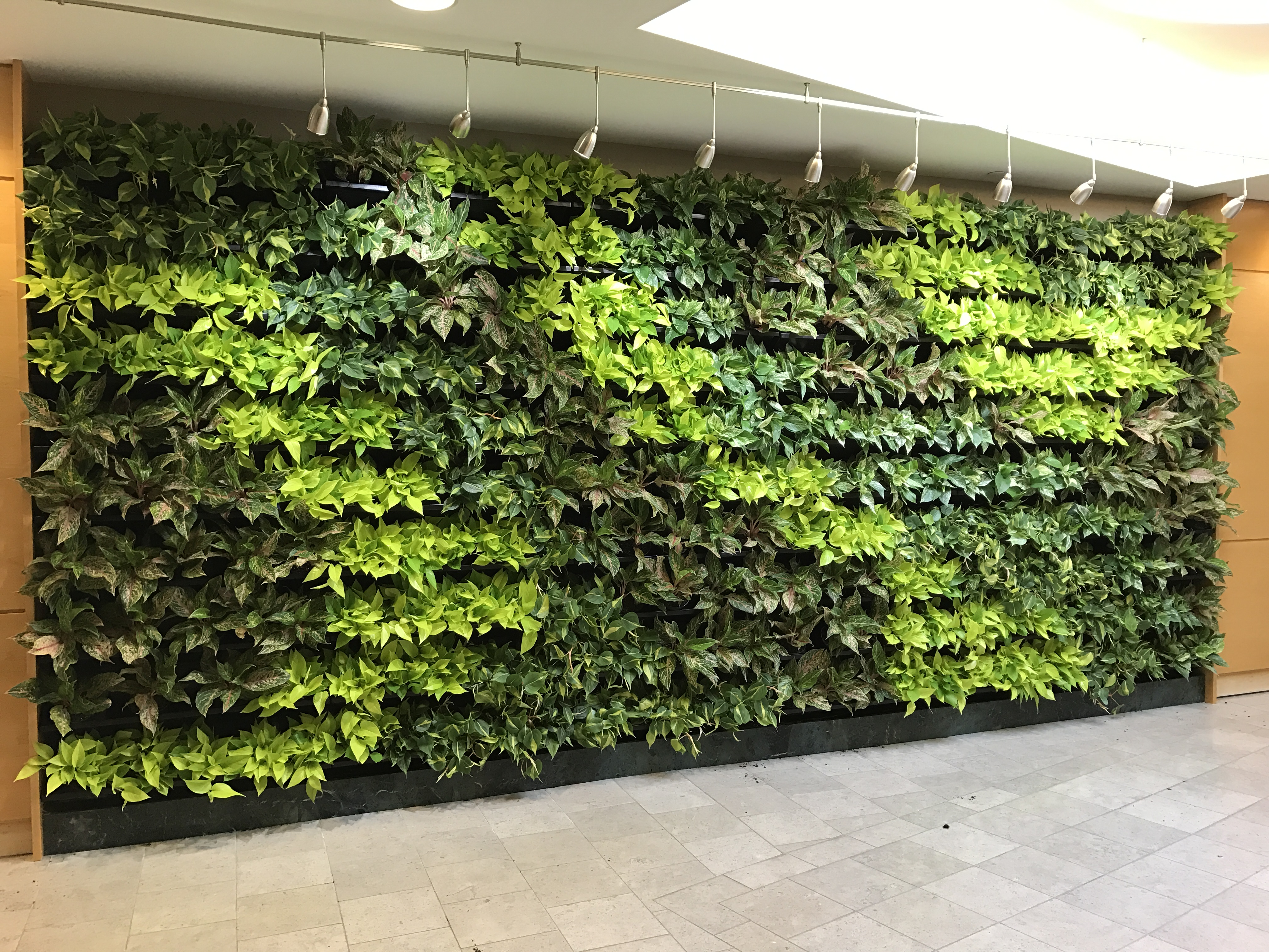 S & H Interiorscapes Living Wall